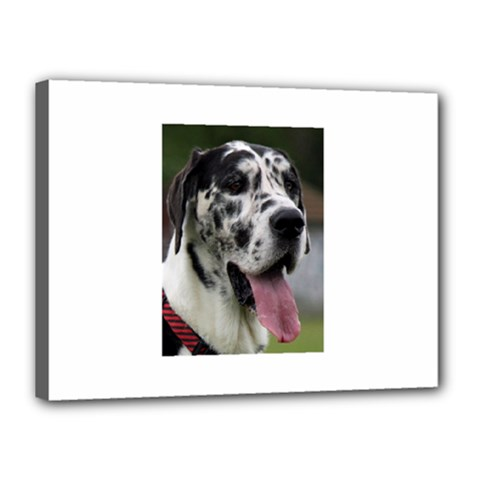 Great Dane harlequin  Canvas 16  x 12