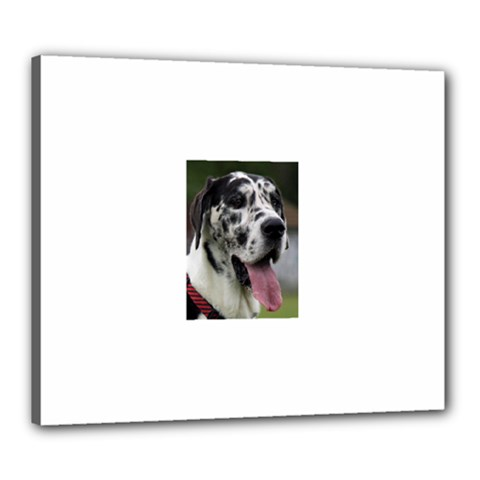 Great Dane harlequin  Canvas 24  x 20