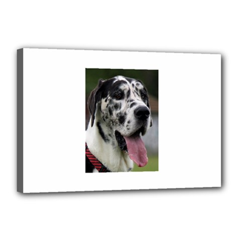 Great Dane harlequin  Canvas 18  x 12