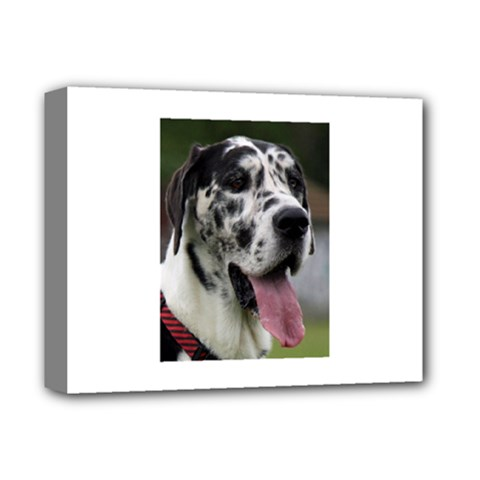 Great Dane harlequin  Deluxe Canvas 14  x 11