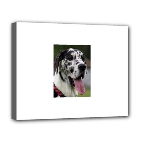 Great Dane harlequin  Deluxe Canvas 20  x 16