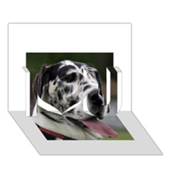 Great Dane harlequin  I Love You 3D Greeting Card (7x5)