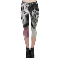 Great Dane harlequin  Capri Leggings