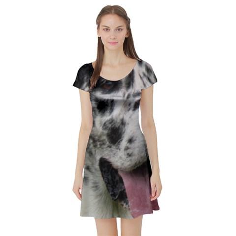 Great Dane harlequin  Short Sleeve Skater Dress