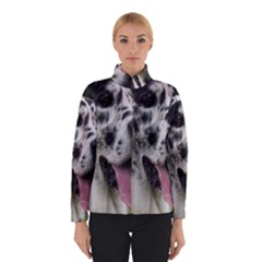 Great Dane harlequin  Winterwear