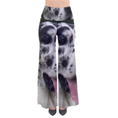 Great Dane harlequin  Pants