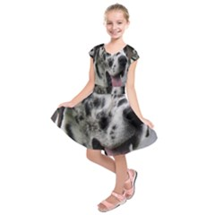 Great Dane harlequin  Kids  Short Sleeve Dress