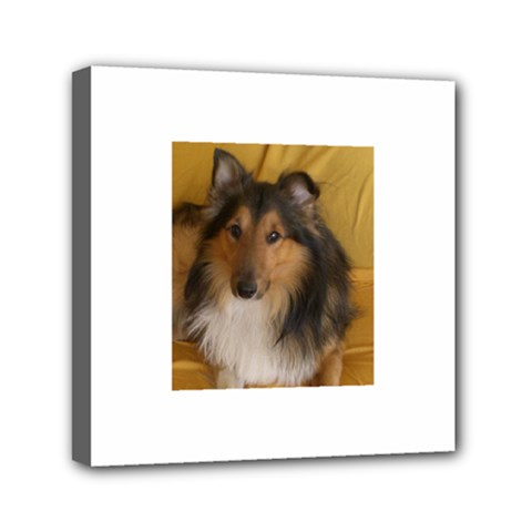 Shetland Sheepdog Mini Canvas 6  x 6