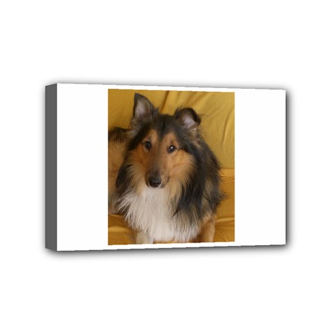Shetland Sheepdog Mini Canvas 6  x 4