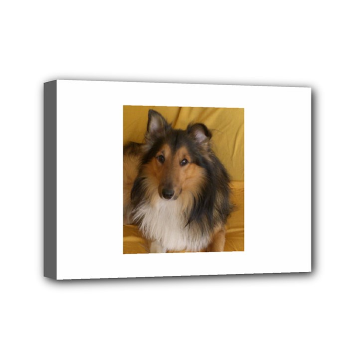 Shetland Sheepdog Mini Canvas 7  x 5