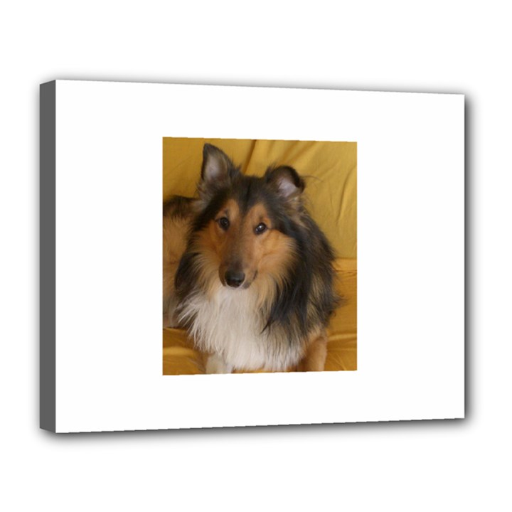 Shetland Sheepdog Canvas 14  x 11