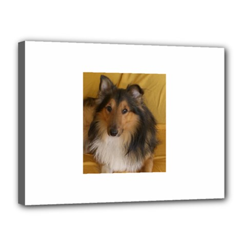 Shetland Sheepdog Canvas 16  x 12