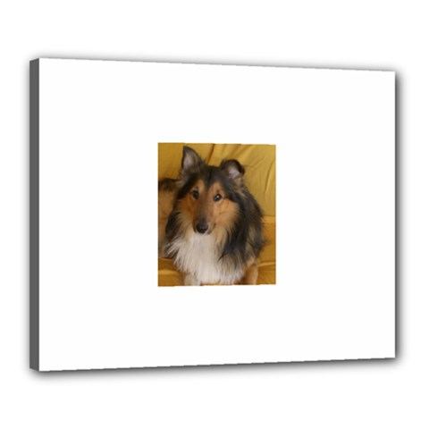Shetland Sheepdog Canvas 20  x 16