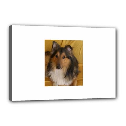 Shetland Sheepdog Canvas 18  x 12