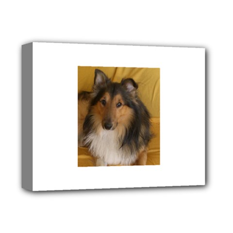 Shetland Sheepdog Deluxe Canvas 14  x 11
