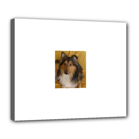 Shetland Sheepdog Deluxe Canvas 24  x 20
