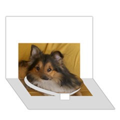 Shetland Sheepdog Heart Bottom 3D Greeting Card (7x5)