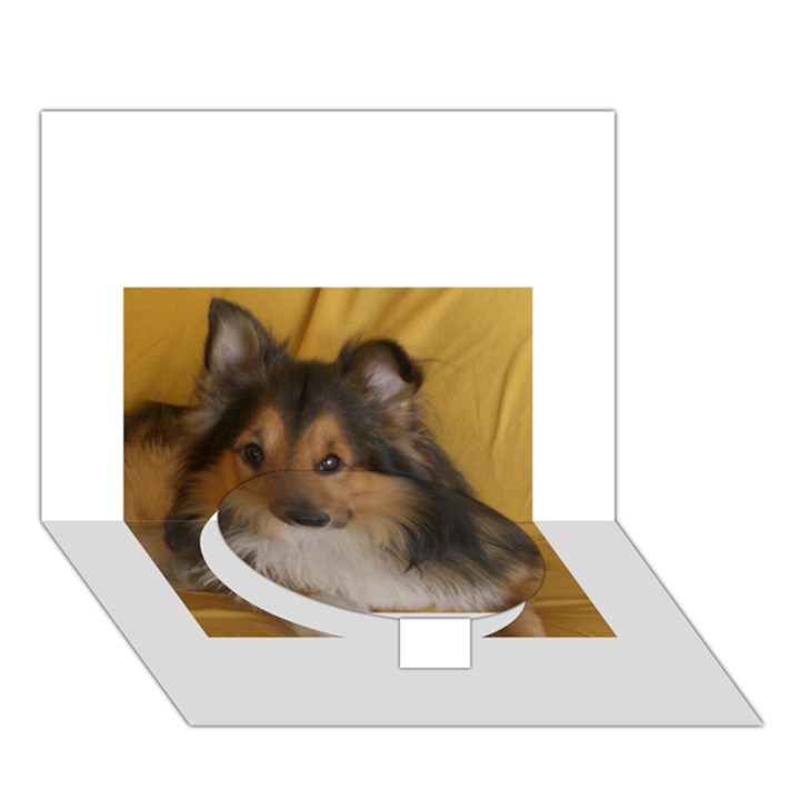 Shetland Sheepdog Circle Bottom 3D Greeting Card (7x5)