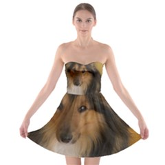 Shetland Sheepdog Strapless Bra Top Dress