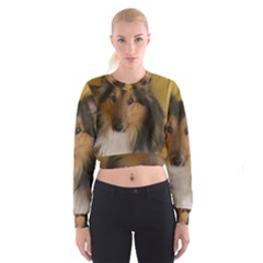 Shetland Sheepdog Women s Cropped Sweatshirt