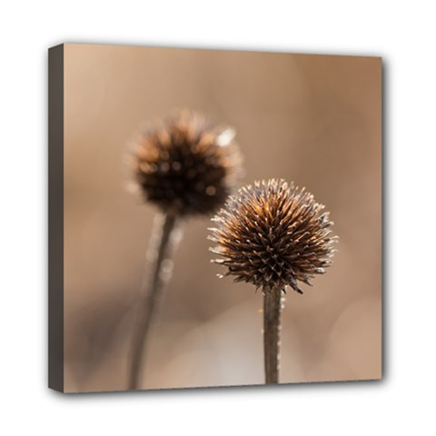 Withered Globe Thistle In Autumn Macro Mini Canvas 8  X 8