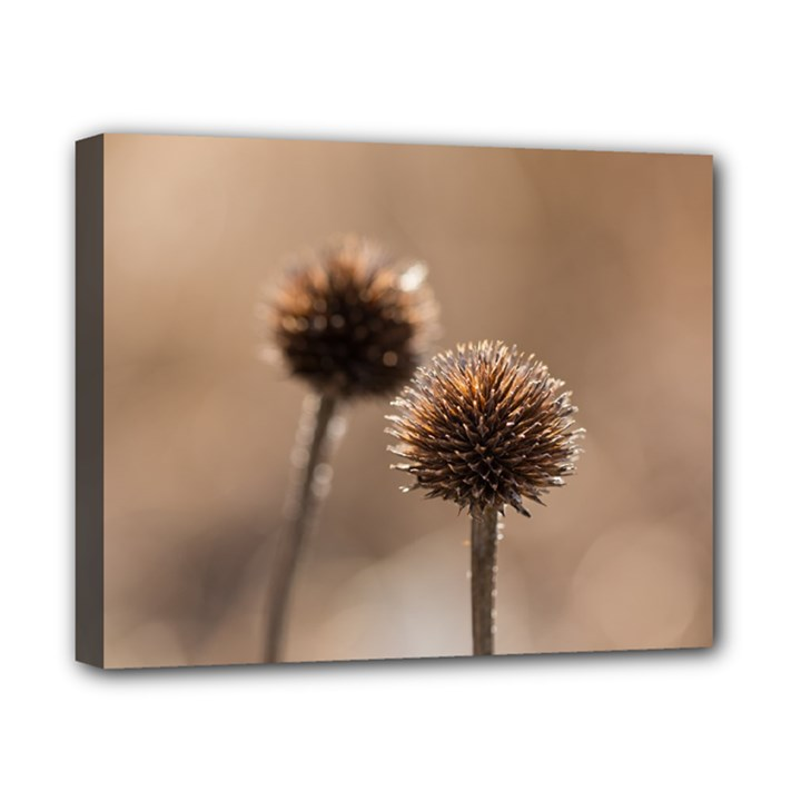 Withered Globe Thistle In Autumn Macro Canvas 10  x 8