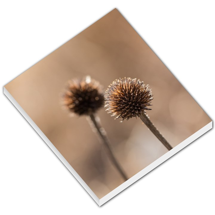 Withered Globe Thistle In Autumn Macro Small Memo Pads