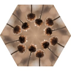 Withered Globe Thistle In Autumn Macro Mini Folding Umbrellas
