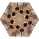 Withered Globe Thistle In Autumn Macro Mini Folding Umbrellas View1