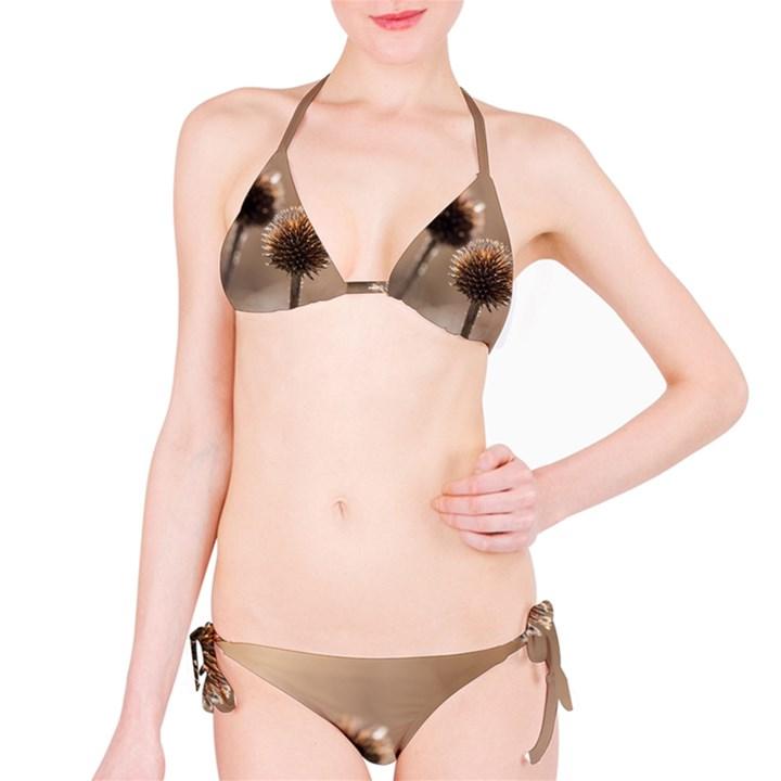 Withered Globe Thistle In Autumn Macro Bikini Set