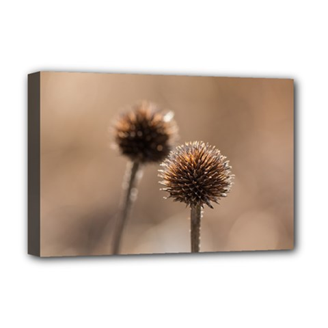 Withered Globe Thistle In Autumn Macro Deluxe Canvas 18  x 12