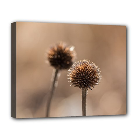 Withered Globe Thistle In Autumn Macro Deluxe Canvas 20  x 16