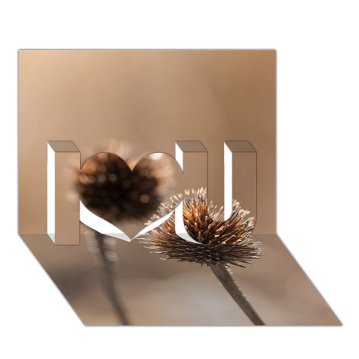 Withered Globe Thistle In Autumn Macro I Love You 3D Greeting Card (7x5)