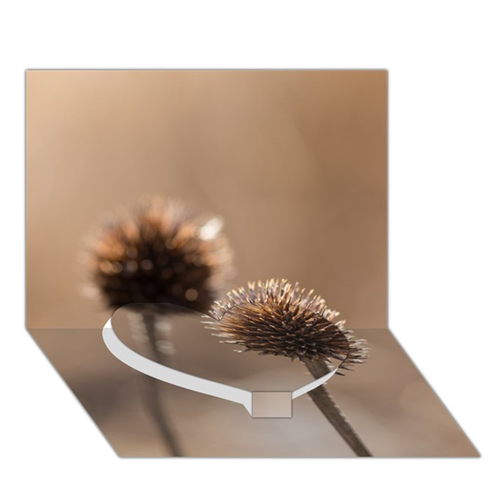 Withered Globe Thistle In Autumn Macro Heart Bottom 3D Greeting Card (7x5)