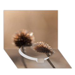 Withered Globe Thistle In Autumn Macro Circle Bottom 3D Greeting Card (7x5)