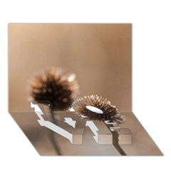 Withered Globe Thistle In Autumn Macro Love Bottom 3d Greeting Card (7x5)