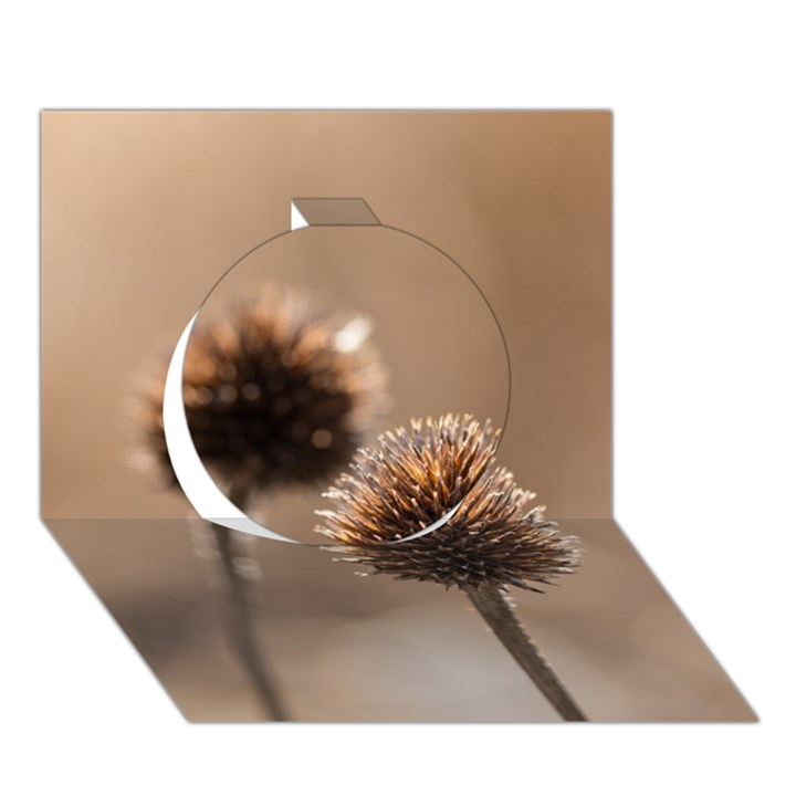 Withered Globe Thistle In Autumn Macro Circle 3D Greeting Card (7x5)