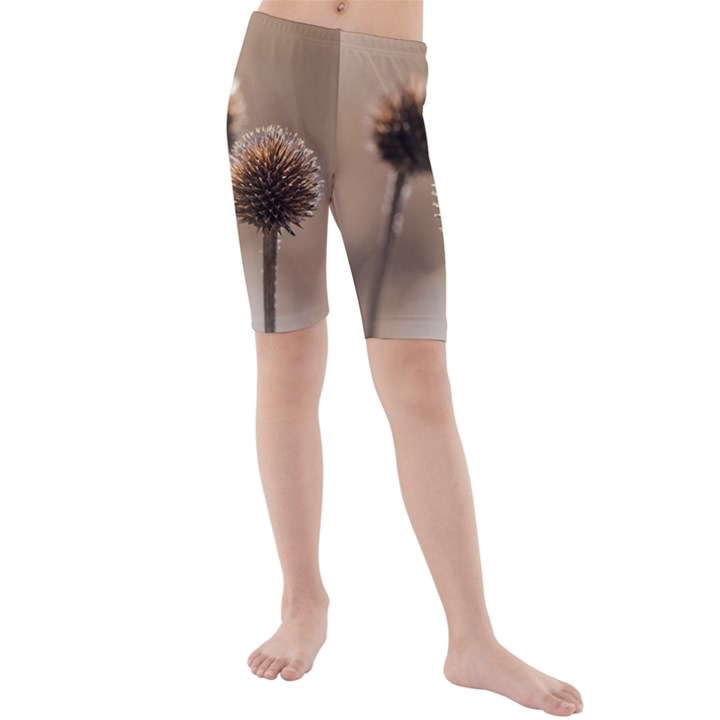 Withered Globe Thistle In Autumn Macro Kids  Mid Length Swim Shorts