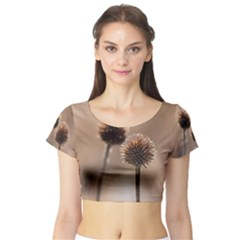 Withered Globe Thistle In Autumn Macro Short Sleeve Crop Top (tight Fit)