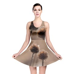 Withered Globe Thistle In Autumn Macro Reversible Skater Dress