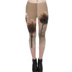 Withered Globe Thistle In Autumn Macro Capri Leggings