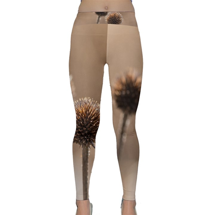 Withered Globe Thistle In Autumn Macro Yoga Leggings