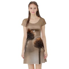 Withered Globe Thistle In Autumn Macro Short Sleeve Skater Dress