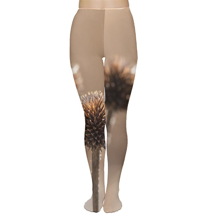 Withered Globe Thistle In Autumn Macro Women s Tights