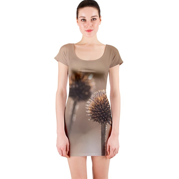 Withered Globe Thistle In Autumn Macro Short Sleeve Bodycon Dress