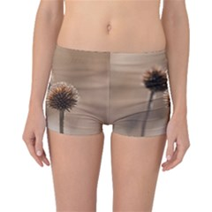 Withered Globe Thistle In Autumn Macro Boyleg Bikini Bottoms