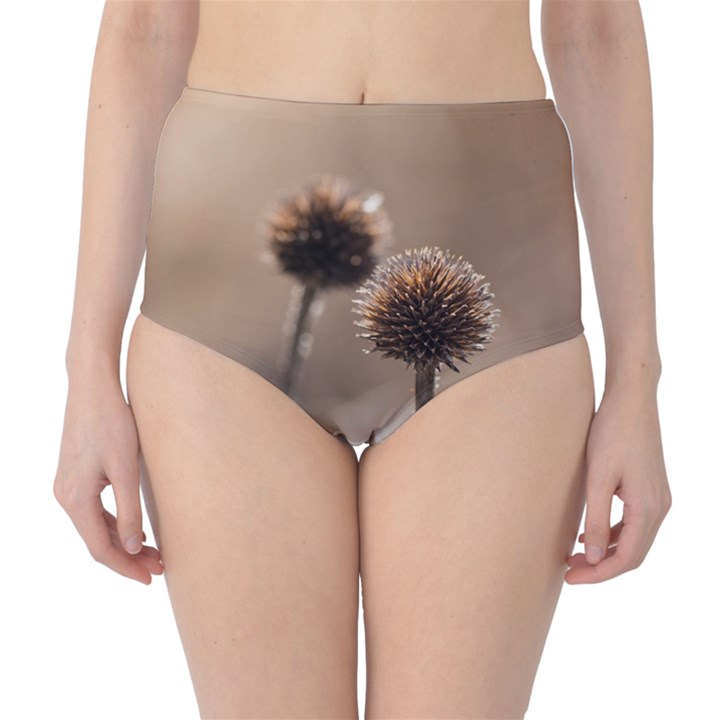 Withered Globe Thistle In Autumn Macro High-Waist Bikini Bottoms