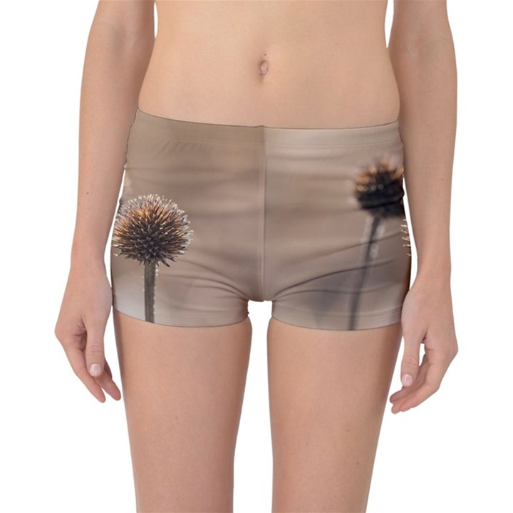 Withered Globe Thistle In Autumn Macro Reversible Boyleg Bikini Bottoms