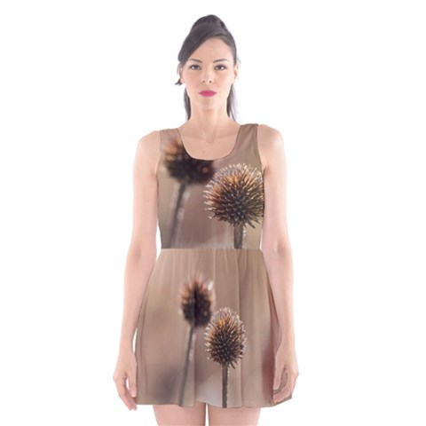 Withered Globe Thistle In Autumn Macro Scoop Neck Skater Dress