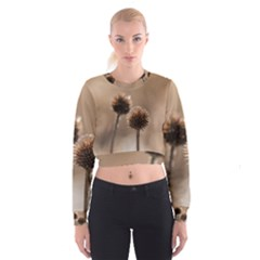 Withered Globe Thistle In Autumn Macro Women s Cropped Sweatshirt